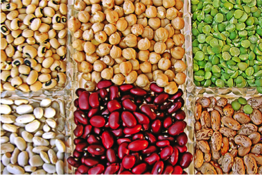 Beans For Blood formation