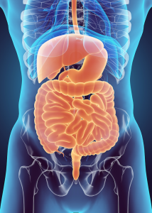 Digestive System and Stress